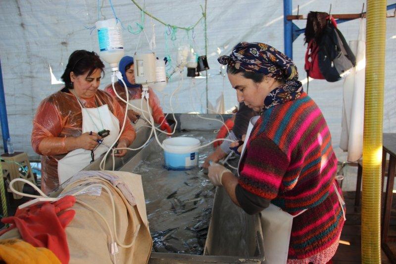 Muğla'daki balık hastanesi görenleri şaşırtıyor