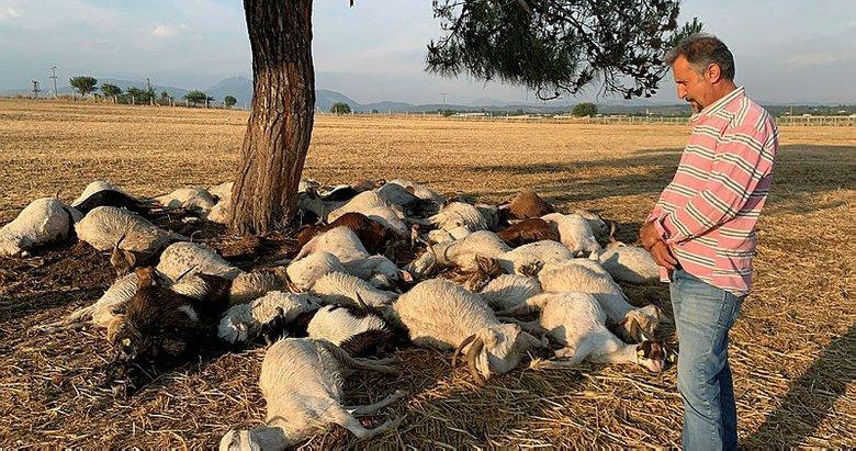 İzmir'de yıldırım düştü, 55 küçükbaş hayvan telef oldu