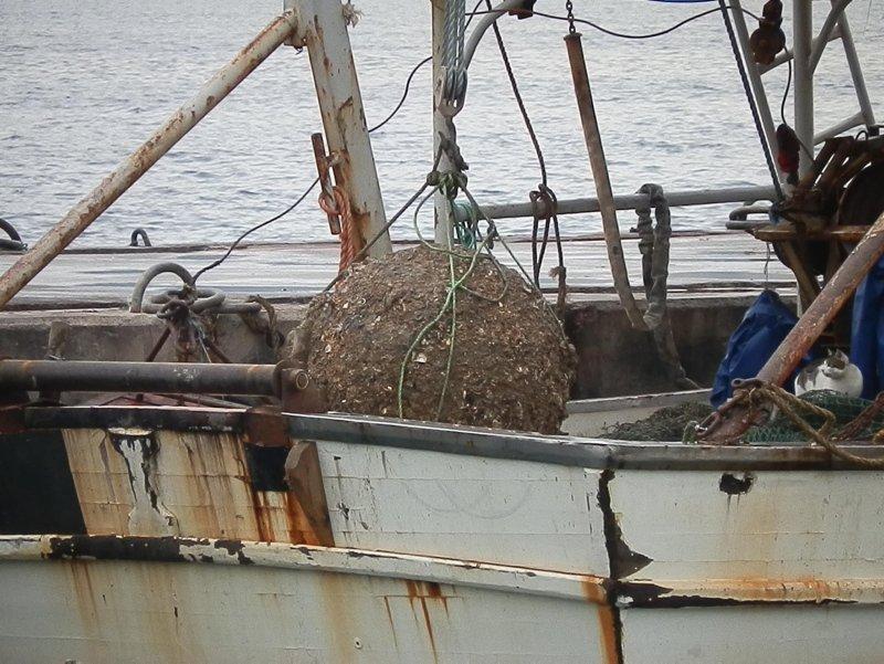İzmir'de inanılmaz olay! Bakın balıkçının ağına ne takıldı?