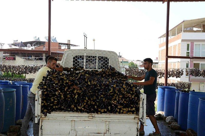 Patlıcan kurutma işi Nazillide 600 ailenin geçim kapısı