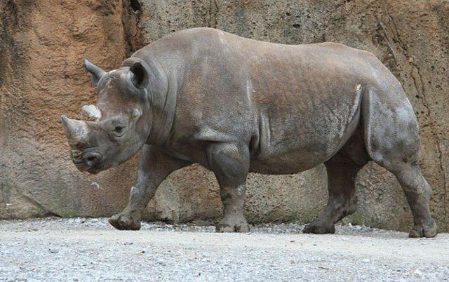 İşte dünyadaki en acımasız canlılar...