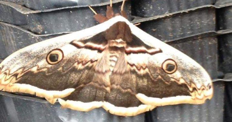 Aydın'da görülen bu canlı şaşırttı! İşte var olduğuna inanamayacağınız ilginç canlılar