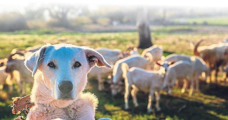 ESBAŞ her gün 3 bin hayvanı besliyor