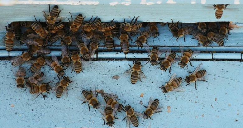 Manisa'da arı sokmasından 2 kişi hayatını kaybetti! Arı sokmasına karşı ne yapılmalı?