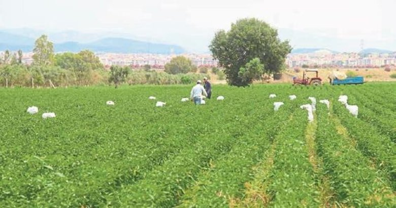 Torbalı'da biber hasadı başladı