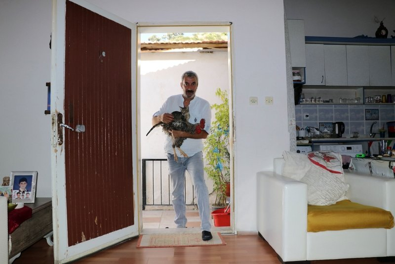 Aydın'da ilginç olay! Kesilmekten kurtardığı horozla dost oldu