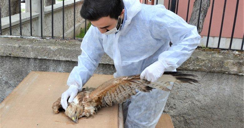 Afyonkarahisar'da bulunan yaralı kızıl şahin tedavi altına alındı