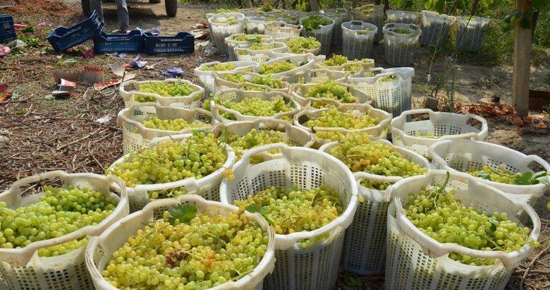 Alaşehir'de tarım ihracatında 600 milyon dolar gelir elde edildi