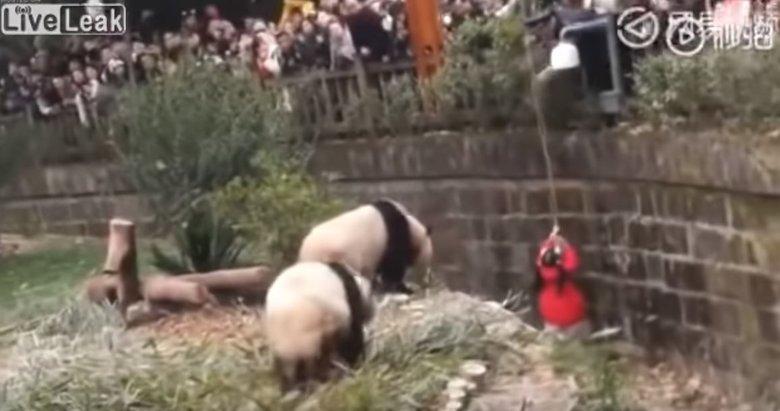 Hayvanat bahçesinde kan donduran anlar!