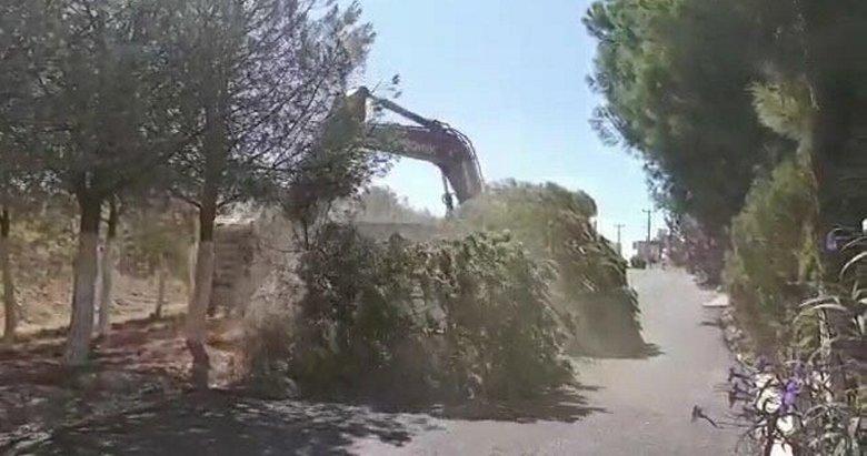 İzmir Karaburun'da ağaç katliamı yaşanmıştı! CHP'li başkandan akılalmaz savunma
