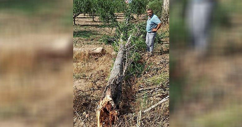 İzmir'de yağış ve rüzgar ağaç devirdi