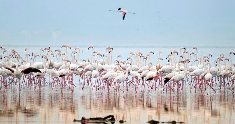 İzmir'in flamingo kreşi