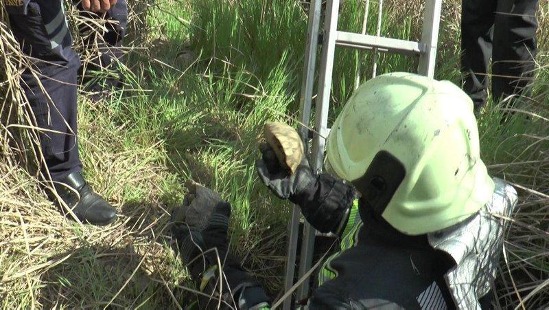Denizli'de kuyuya atıldığı sanılan 17 kaplumbağayı itfaiye kurtardı