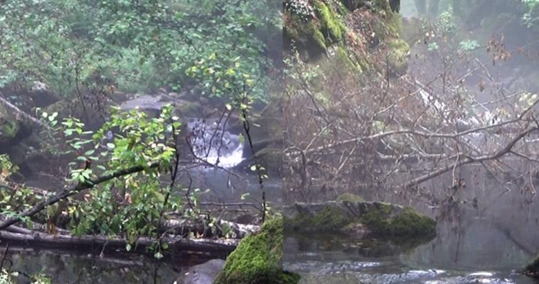 Kaz Dağlarında kırmızı benekli alabalığa doğal koruma