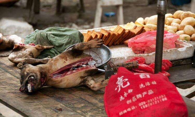 İşte koronavirüs salgının kaynağı! Pazarda satılan hayvanlar şok etti!
