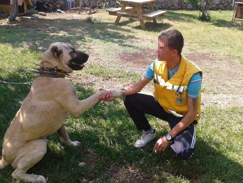 Denizli'de köpek çiftliğindeki vahşi cinayette yeni gelişme
