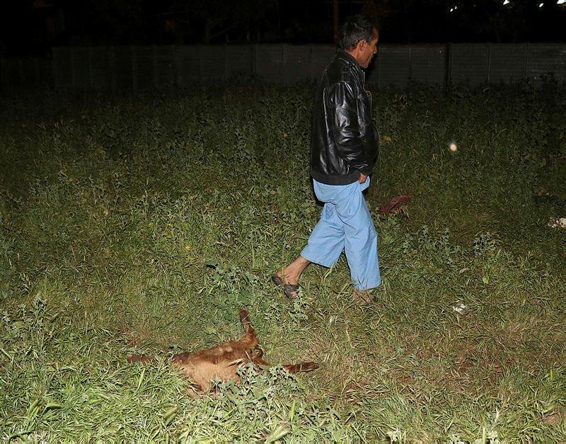 Sokak köpeği dehşeti