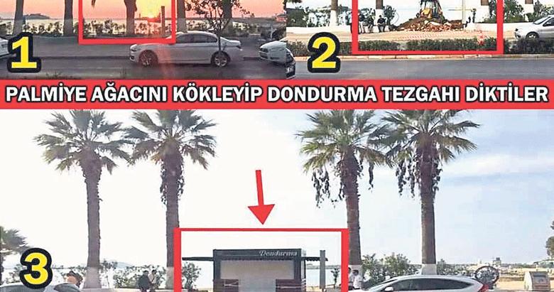 CHP'li belediyelerden ağaç katliamı