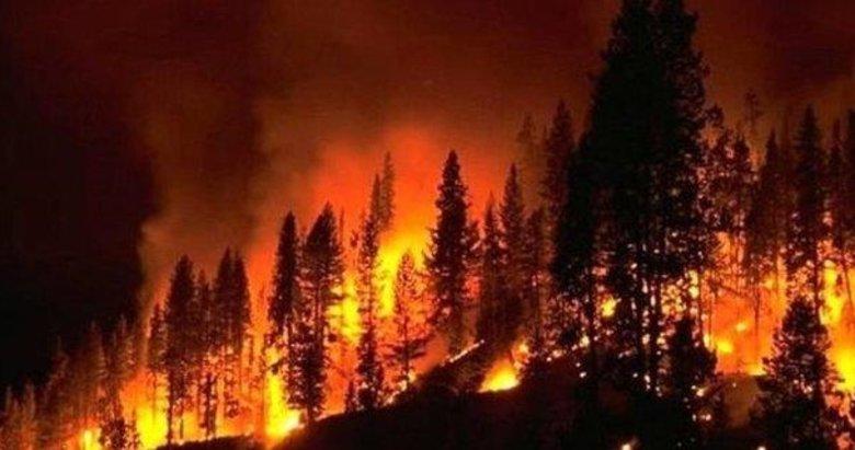 İstanbul'daki orman yangınlarından da PKK çıktı!