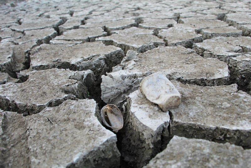 Kuş Cenneti'nde kuraklıktan sular çekildi, insanoğlunun ayıbı ortaya çıktı