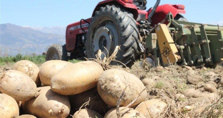 Çiftçiden alınıp ücretsiz dağıtılacak