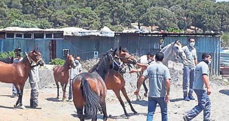 Başkan Kaya bu kez atların 'ip'ini kopardı