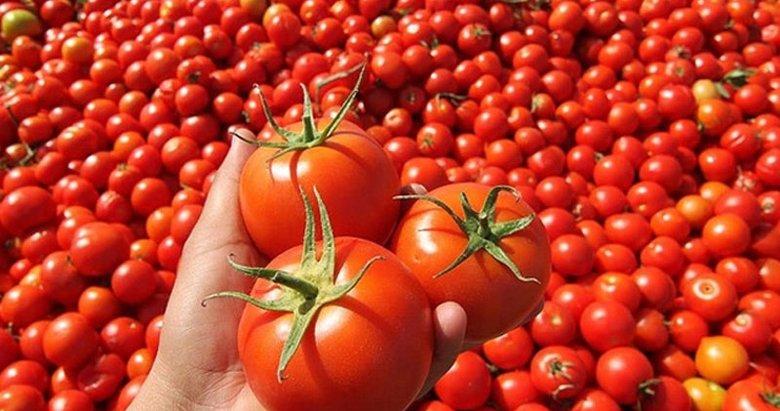 45 ülkeye 128 milyon liralık domates sattık