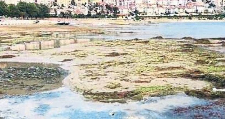 Eğridir Gölü'ndeki kirliliğe Bakanlık'tan inceleme