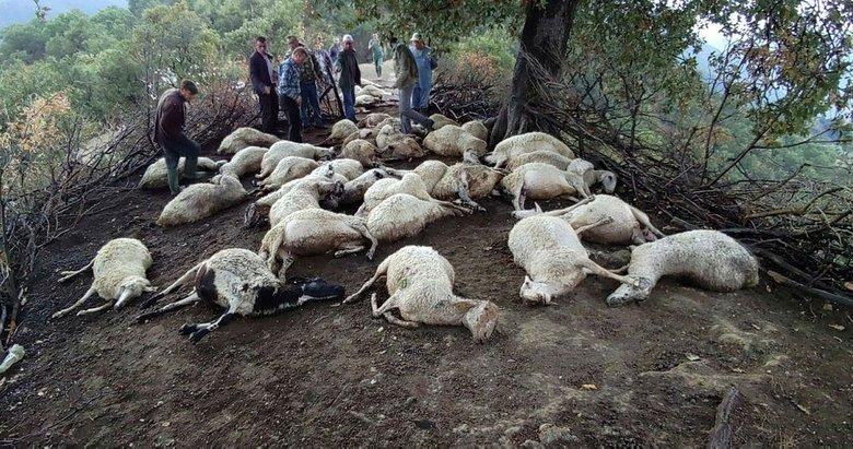 Aydın Kuyucak'ta düşen yıldırım 39 hayvanı telef etti