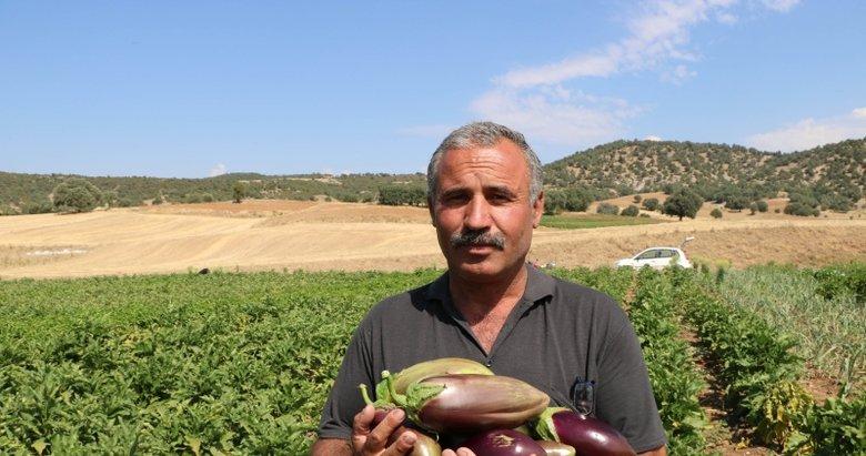 Afyon'da asırlık ata tohumu ile patlıcan üretiyorlar