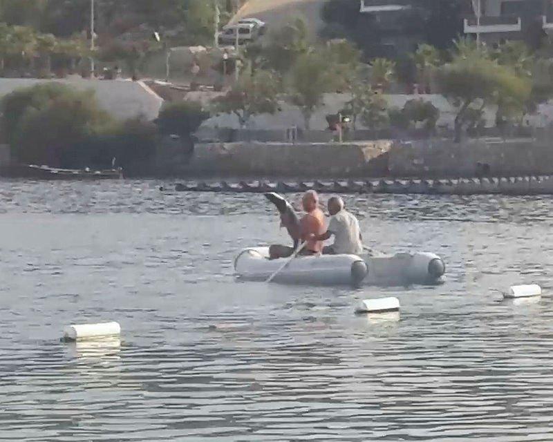 Köpek balığının yardımına koştular