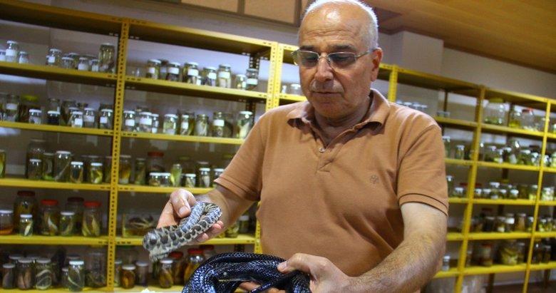 Profesörün yılan sevgisi görenleri şaşırtıyor