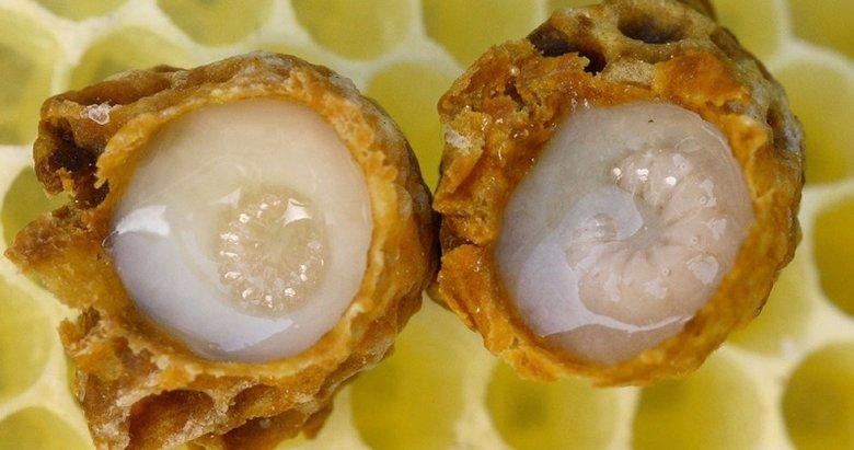 Arı sütü: Şifa dolu bir mucize