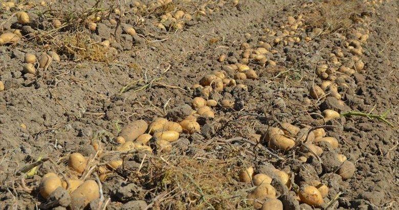 Afyonkarahisar'da kışlık patates fiyatı üreticinin yüzünü güldürüyor