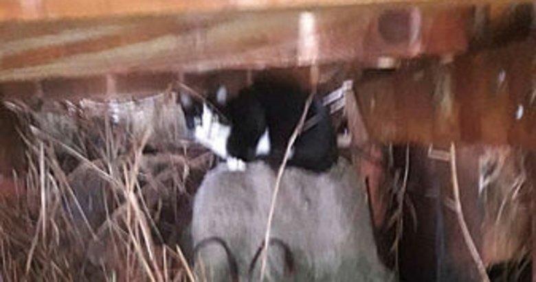 Ortaca'da iskele altında mahsur kalan kedi kurtarıldı