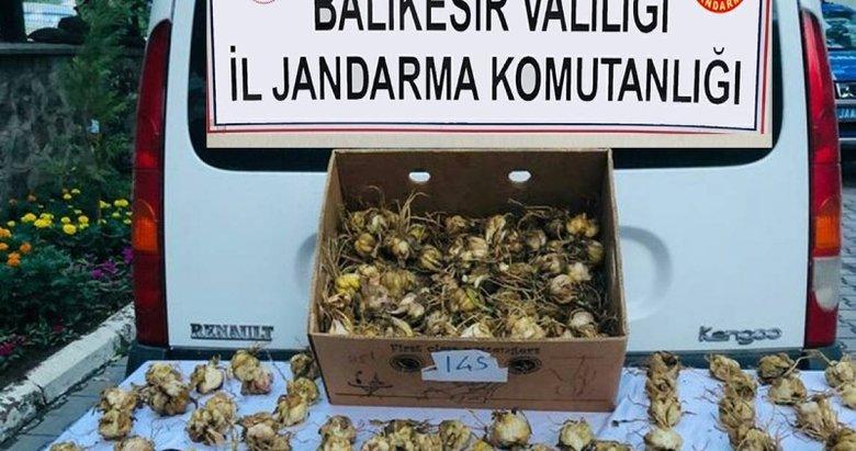 Balıkesir'de koruma altındaki zambakları toplayan kişiye 60 bin lira ceza