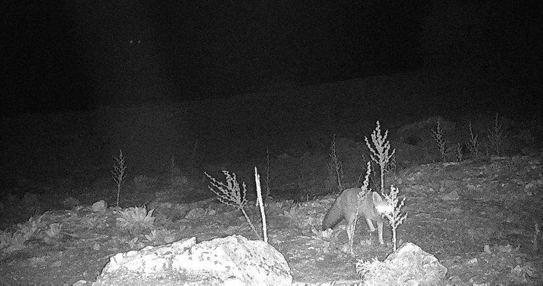 Gece karanlığında kameraya böyle yakalandı! Manisa'da görüldü