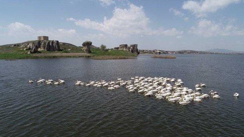 Frigya'nın yeni konukları Pelikanlar oldu