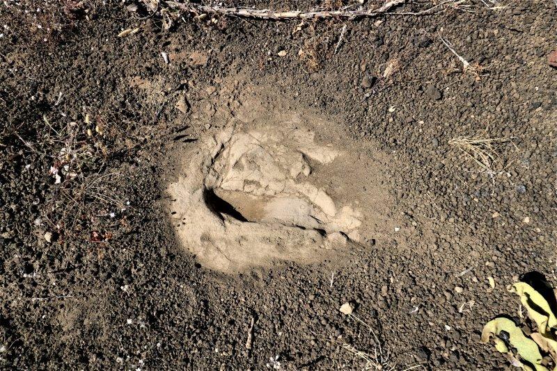Manisa'da 12 bin yıl öncesine ait olduğu düşünülen ayak izleri zamana meydan okuyor