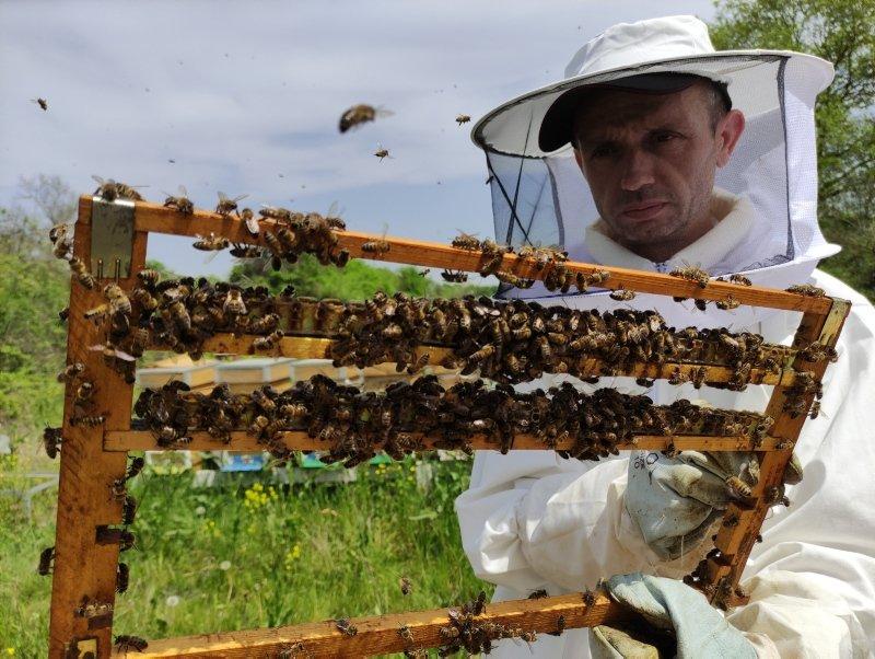 Bağışıklığı güçlendirmede birebir! Gram gram sağdığı arı sütünün kilosunu 8 bin liradan satıyor