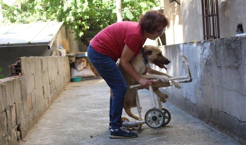 Uşak'ta yaşamaz denilen felçli köpeği hayata döndürdü