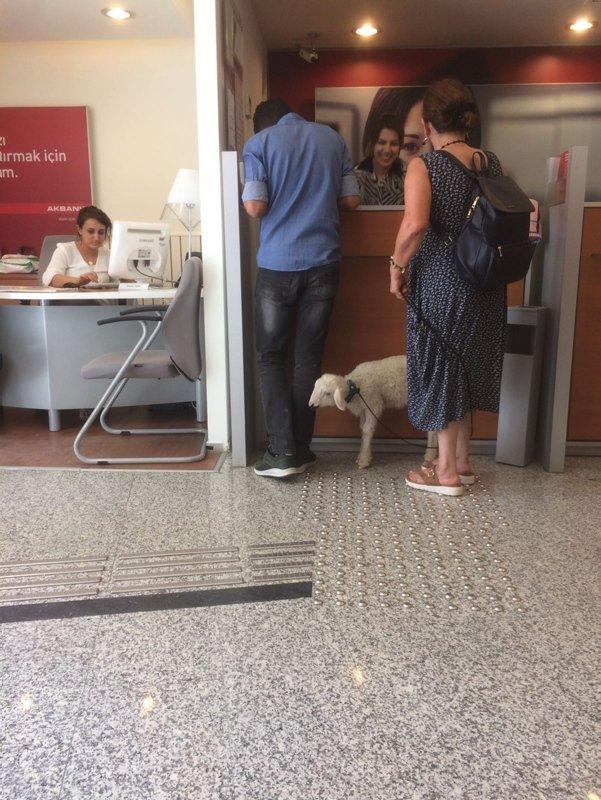 Bankaya kuzu ile girdi, görenler şaştı kaldı
