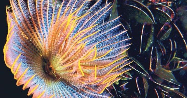 Körfez temizleniyor canlı türü artıyor