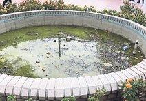 Süs havuzları pislik yuvası
