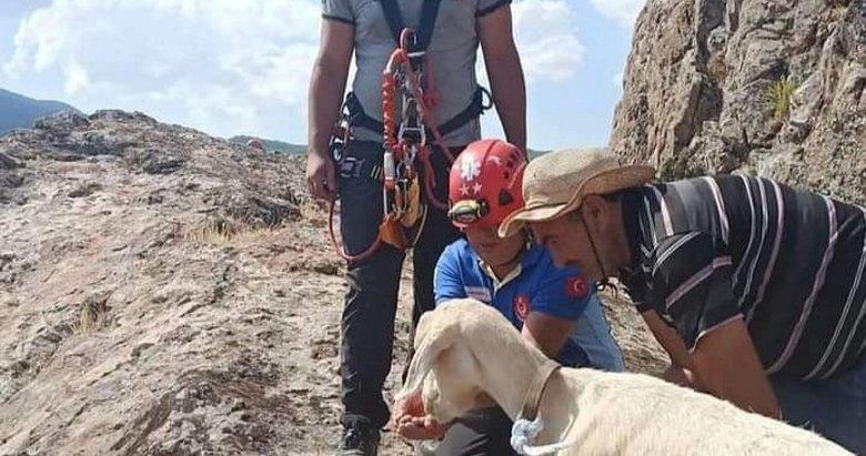 Bergama'da keçi kurtarma operasyonu