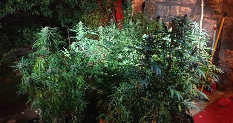 Bodrum'da uyuşturucu operasyonu! Evi adeta uyuşturucu tarlasına çevirmişler