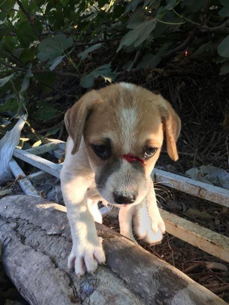 Kuşadası'nda yavru köpekleri odunla döven kadın gözaltına alındı