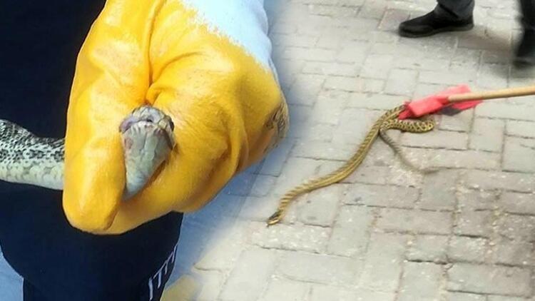 Afyonkarahisar'da yılan paniği! Otomobilden itfaiyeciler çıkardı