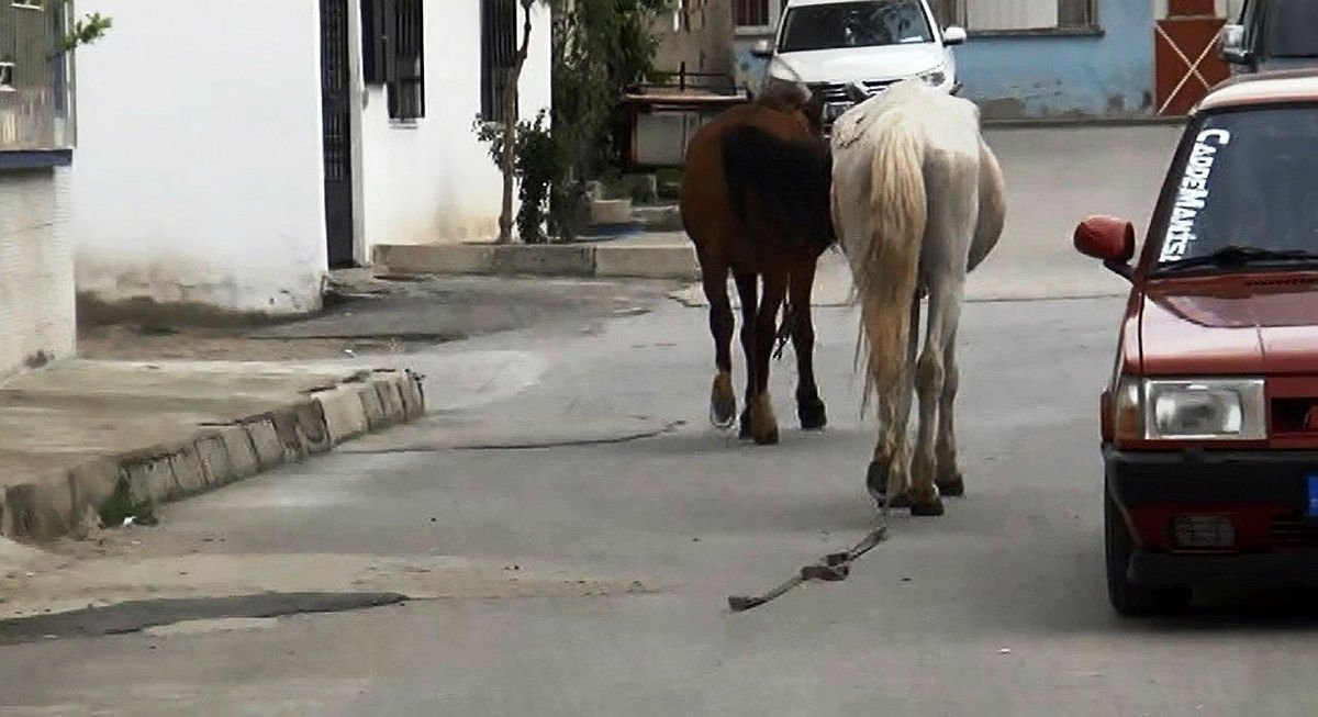 Manisada atlar trafiğe daldı!