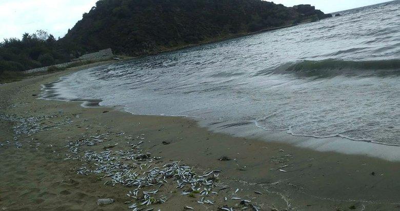 Balıkesir'de yüzlerce ölü balık sahile vurdu